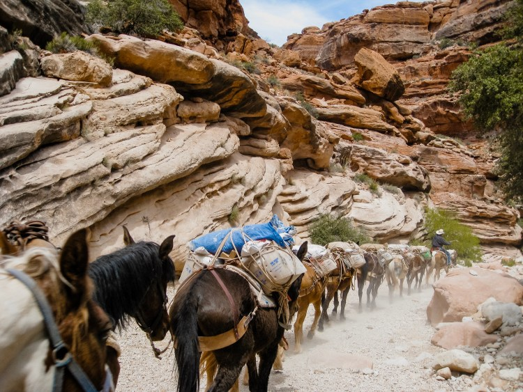 Mail-by-mule train, Havasupai Falls, Grand Canyon, Arizona, USA © 2019 ericarobbin.com | All rights reserved.