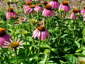 Garden Flowers with Brown Butterfly