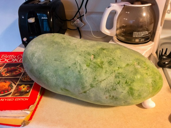 Winter Melon | Erica Robbin