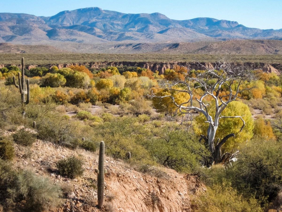 Arizona Desert Scene | Erica Robbin