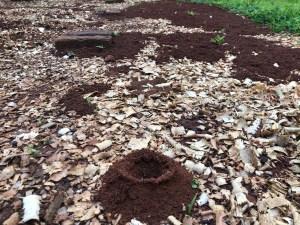 Termite Mound in Garden, Malawi, Africa | Erica Robbin