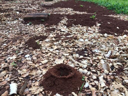 Termite Mound in Garden | Erica Robbin