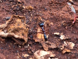 The Ant | Erica Robbin