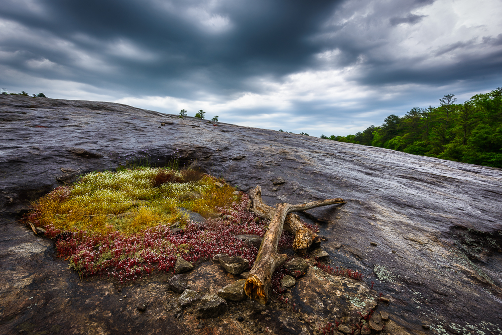 Facts about the kingdom of saudi arabia, including its demographics, climate, economy, and more, as well as a brief history of the region. Arabia Mountain Eric Clay Fine Art Photography