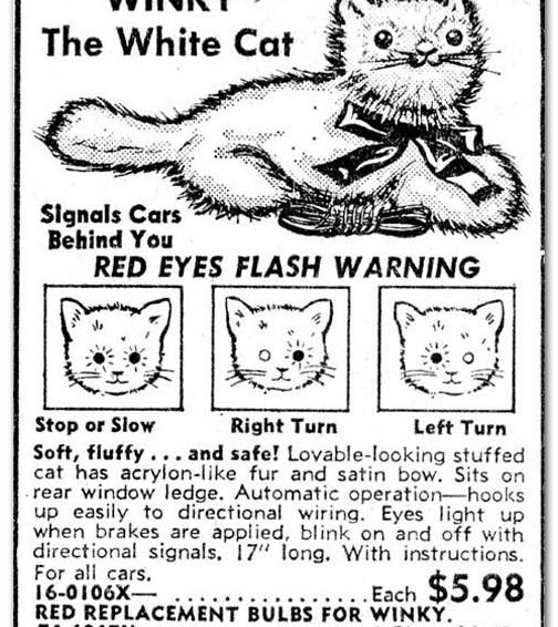 Winky The White Cat
