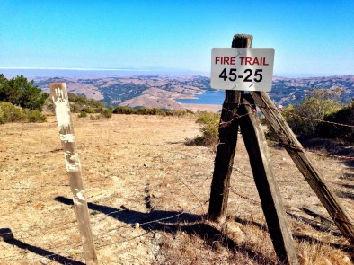 Running trails in the East Bay, CA.