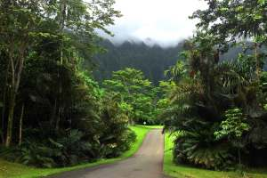 Botanical Park, Honolulu, HI
