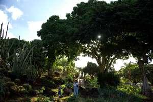 Park, Honolulu, HI