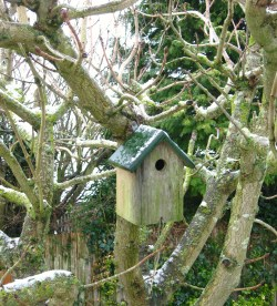 a snowy house for birds
