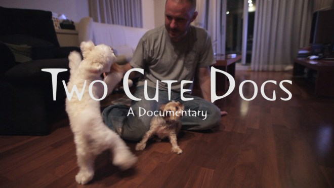 Two Cute Dogs – A Documentary