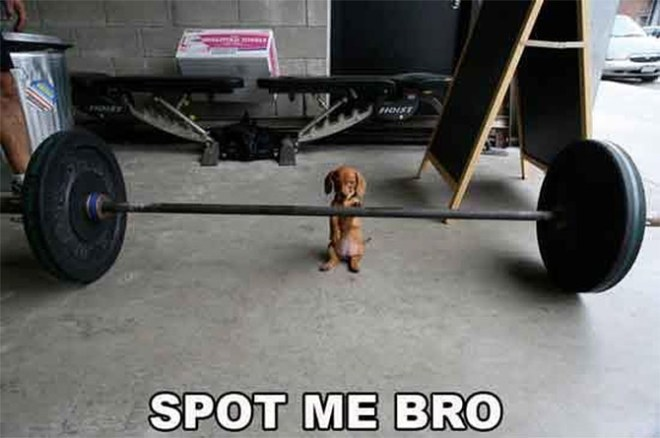 Barbell dog in action