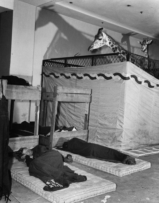 Caretakers, Madison Square Garden, 1944.