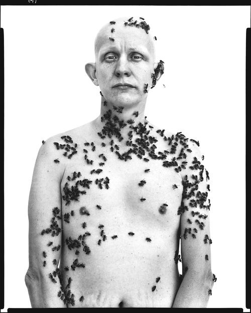 Ronald Fischer, beekeeper, Davis, California, May 9, 1981.