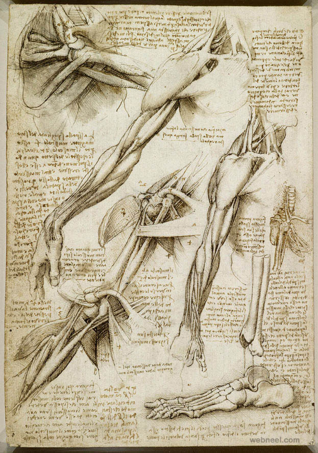 39-leonardo-da-vinci-anatomy.jpg