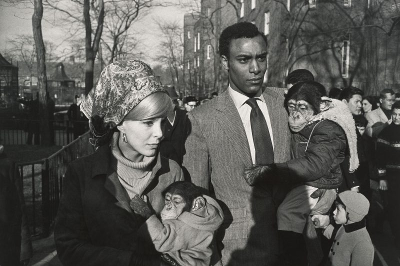 garry winogrand monkey