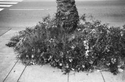 eric kim street photography - europe - 2015- trix1600 - leica - 35mm - black and white-1352