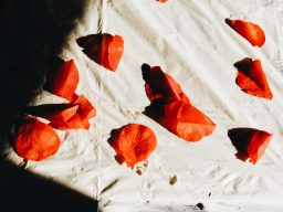 Red petal leaves. Mark and isi Wedding.
