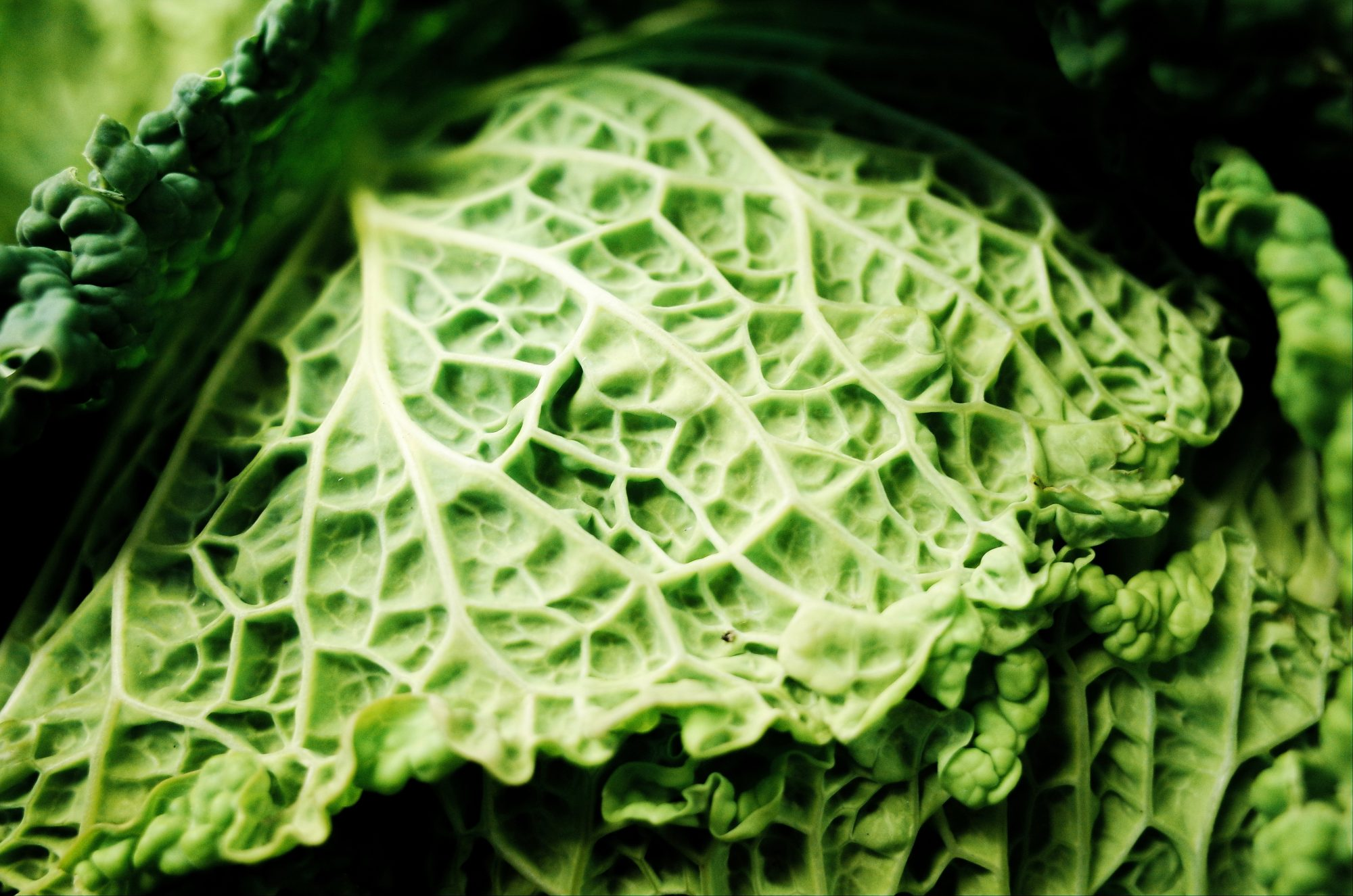 Texture of lettuce leaf. Marseille