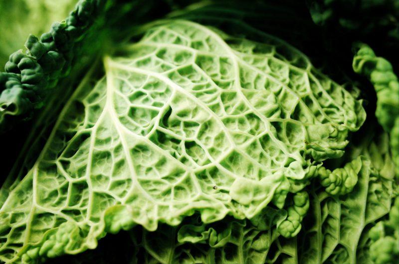 Texture of lettuce leaf. Marseille