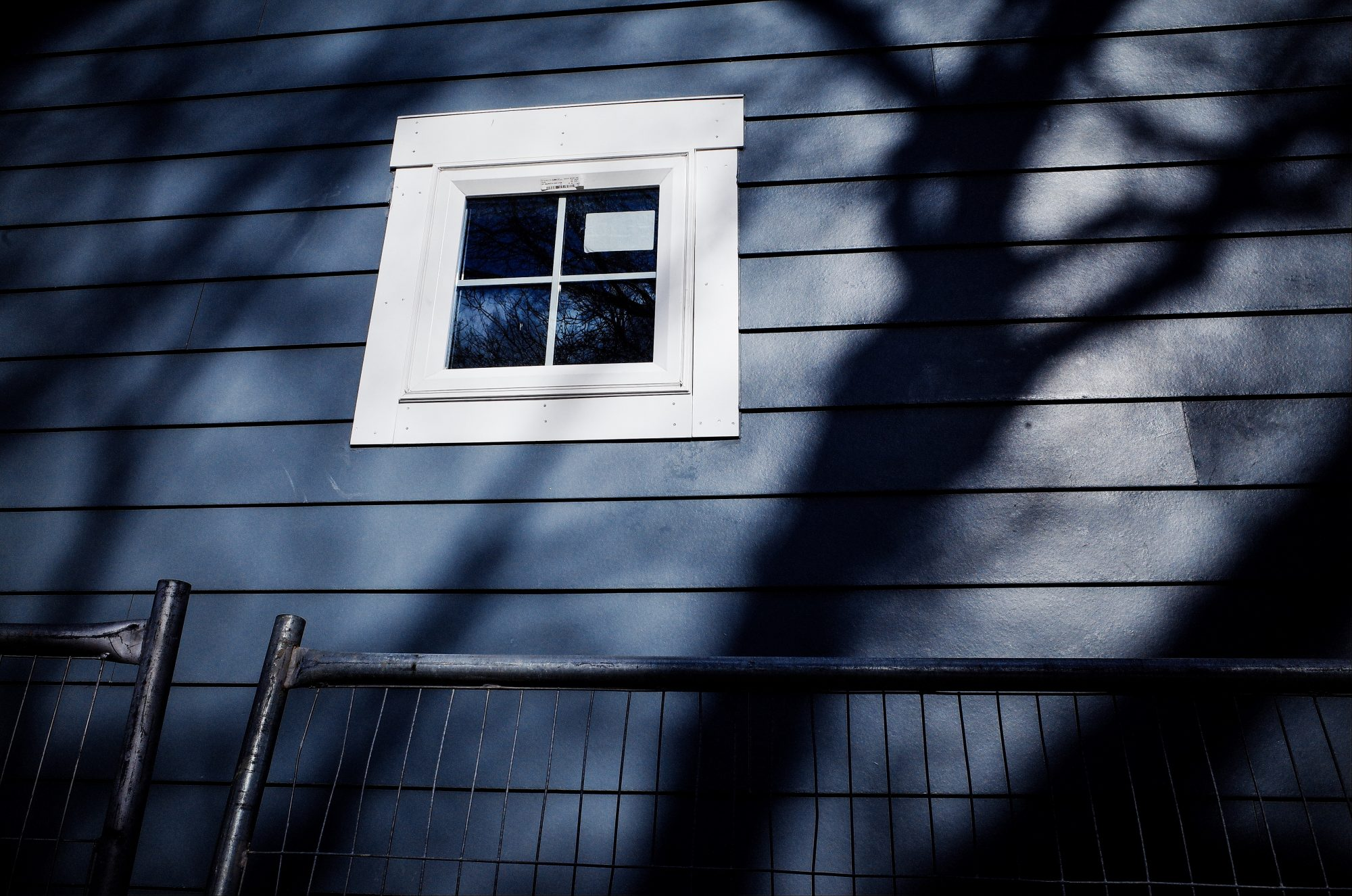 tree and window. Boston, 2018