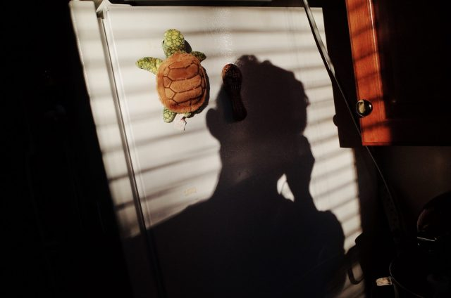 selfie refrigerator, turtle, 2018, boston