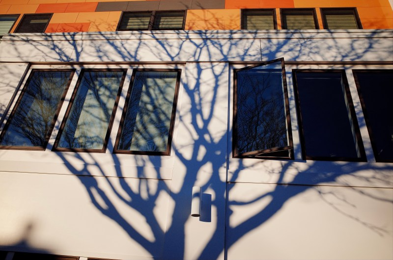 Tree shadow. Boston, 2018