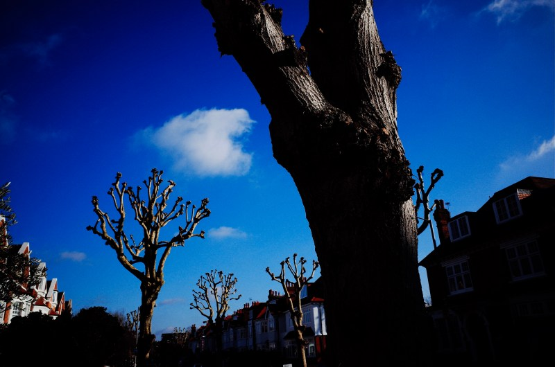 Trees. London