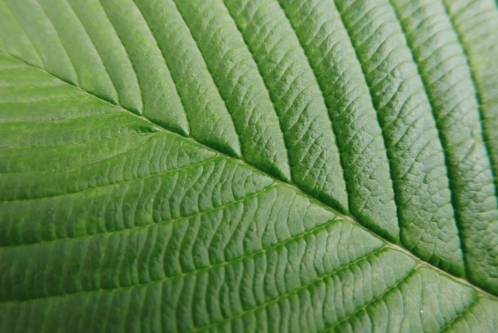 Leaf closeup macro