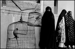 IRAN. Shiraz. 1956. Veiled Muslim women and caged cockatoos (wives of one man).