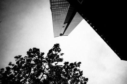Plants and Hanoi skyscraper