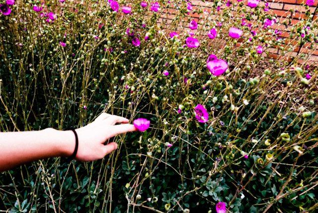 Cindy hand flowers