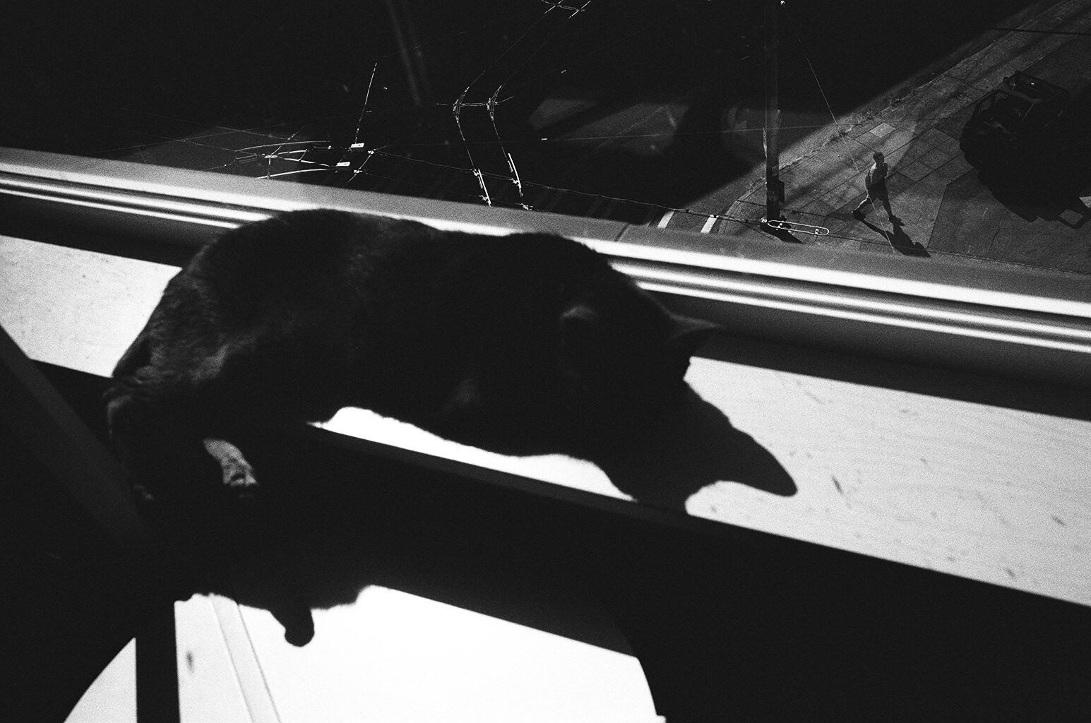 Eric kim black and white film photography Trix 1600 2015 Europe -023.jpg