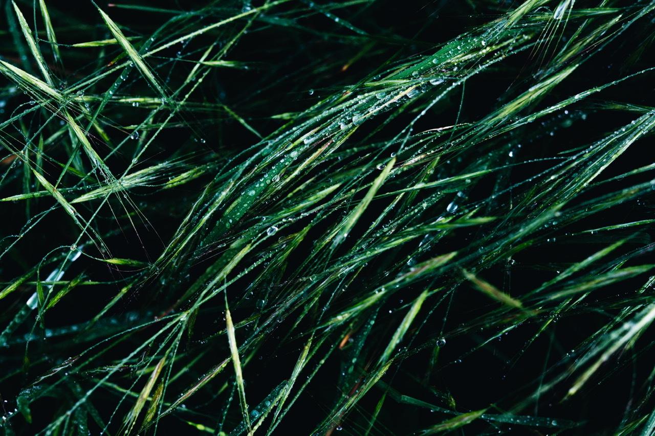 money blades grass