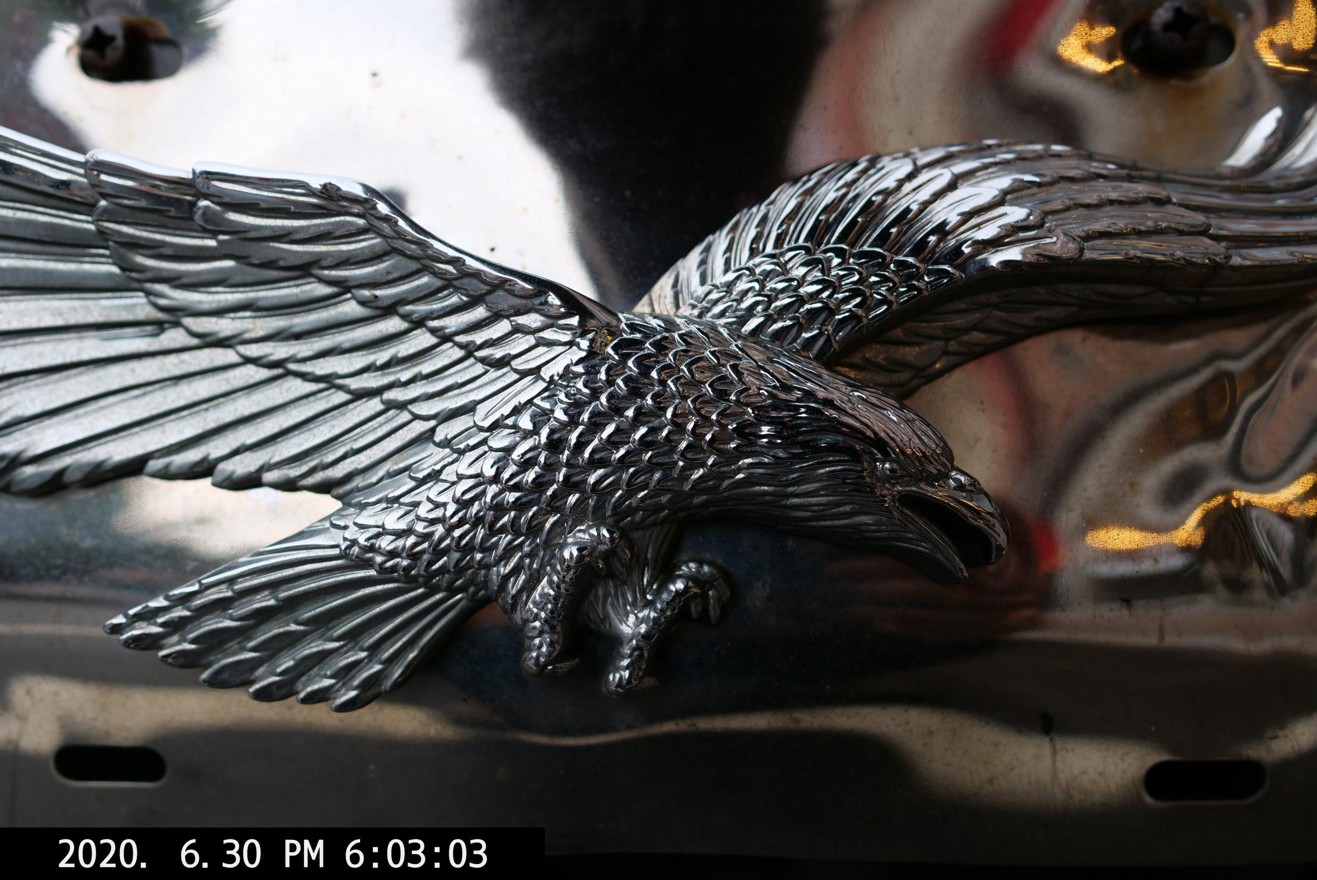 America. Eagle