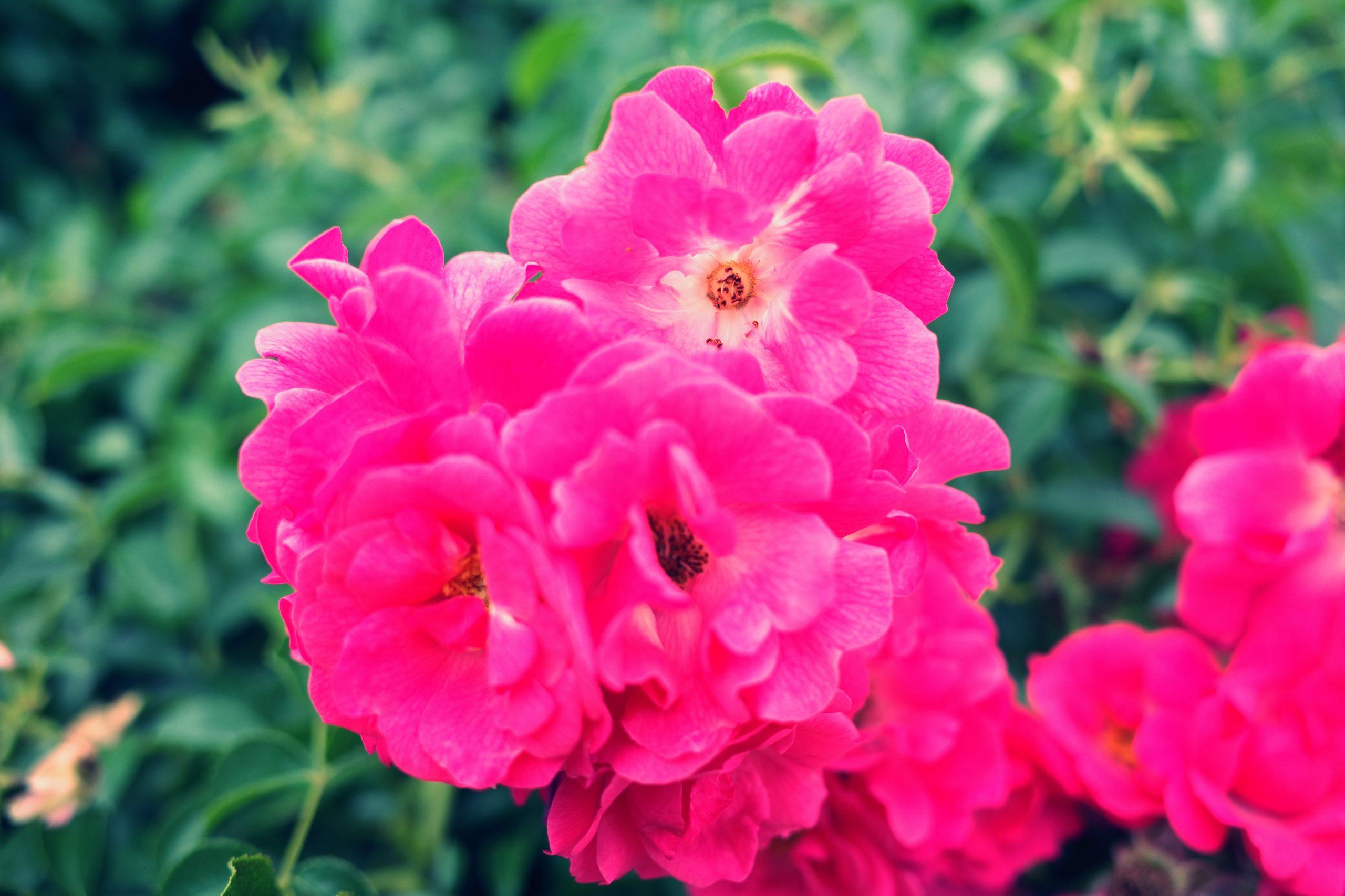 flowers bright