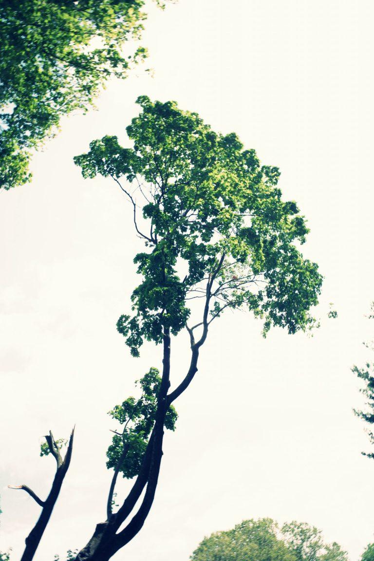 Growth ERIC KIM tree green