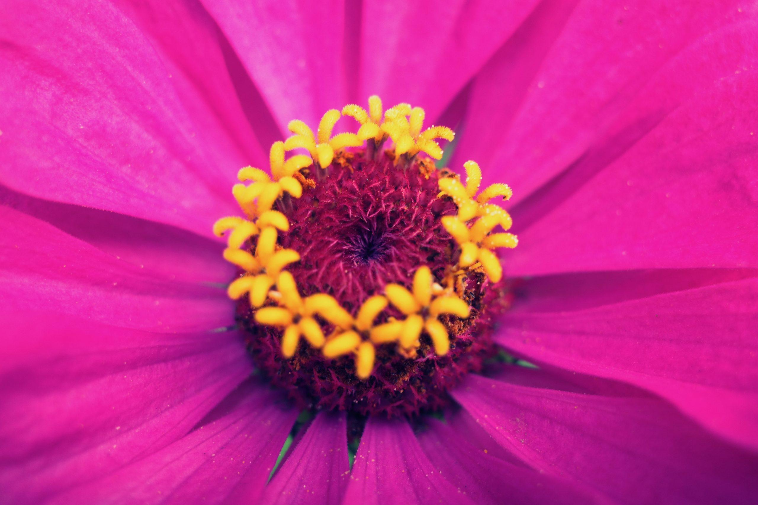 flower macro Ricoh gr iii