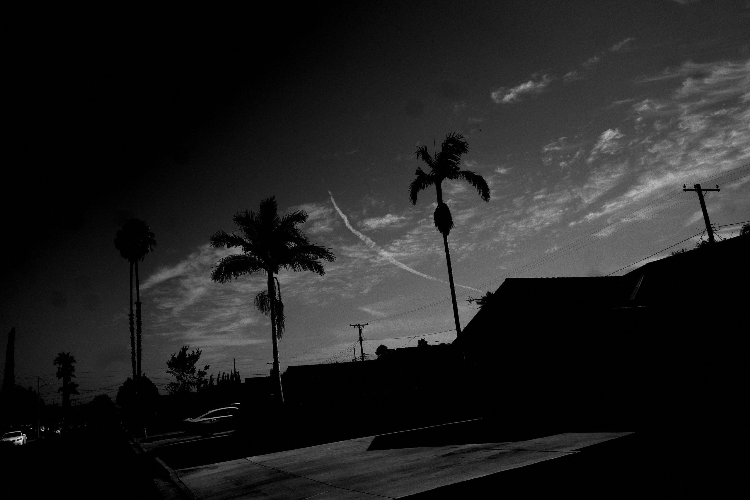 sky palm trees