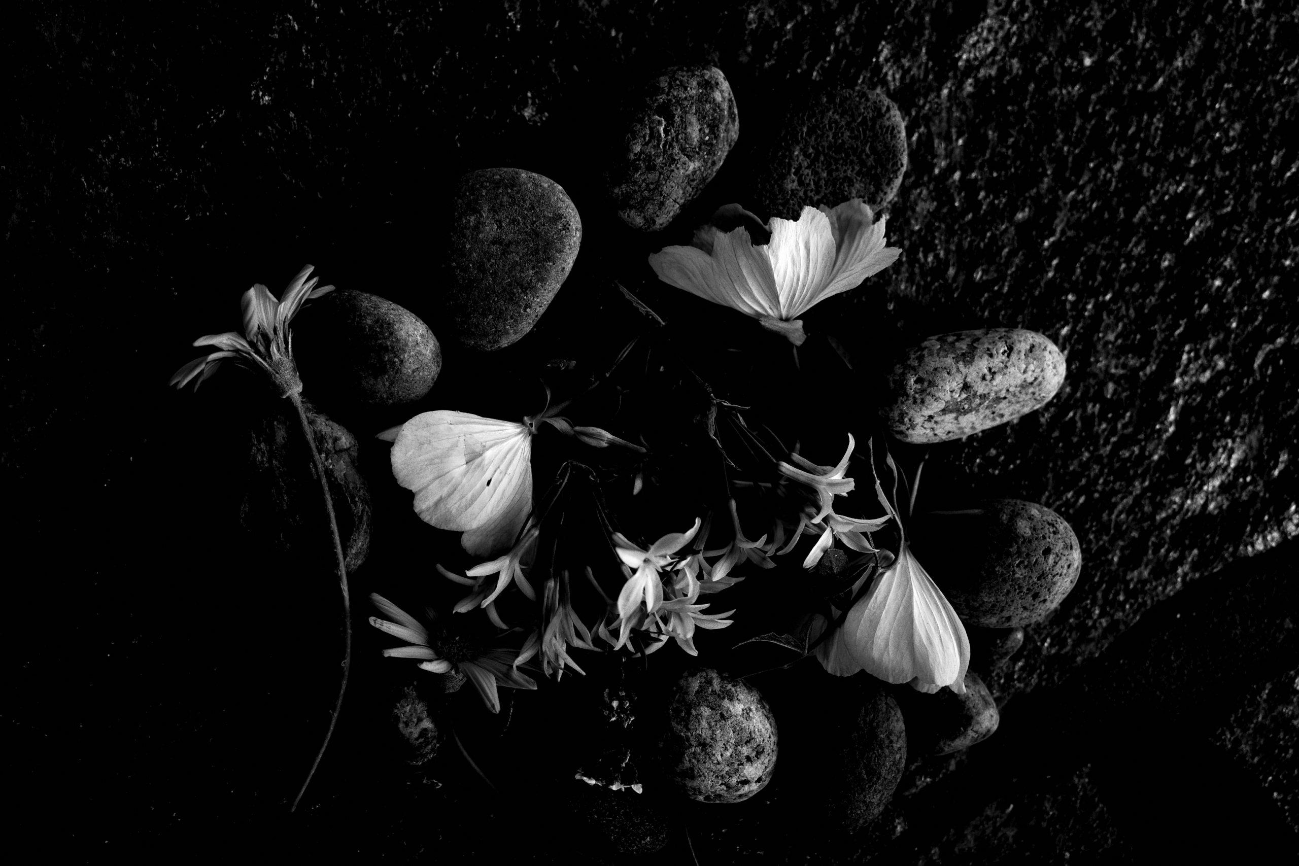Flowers Amelia