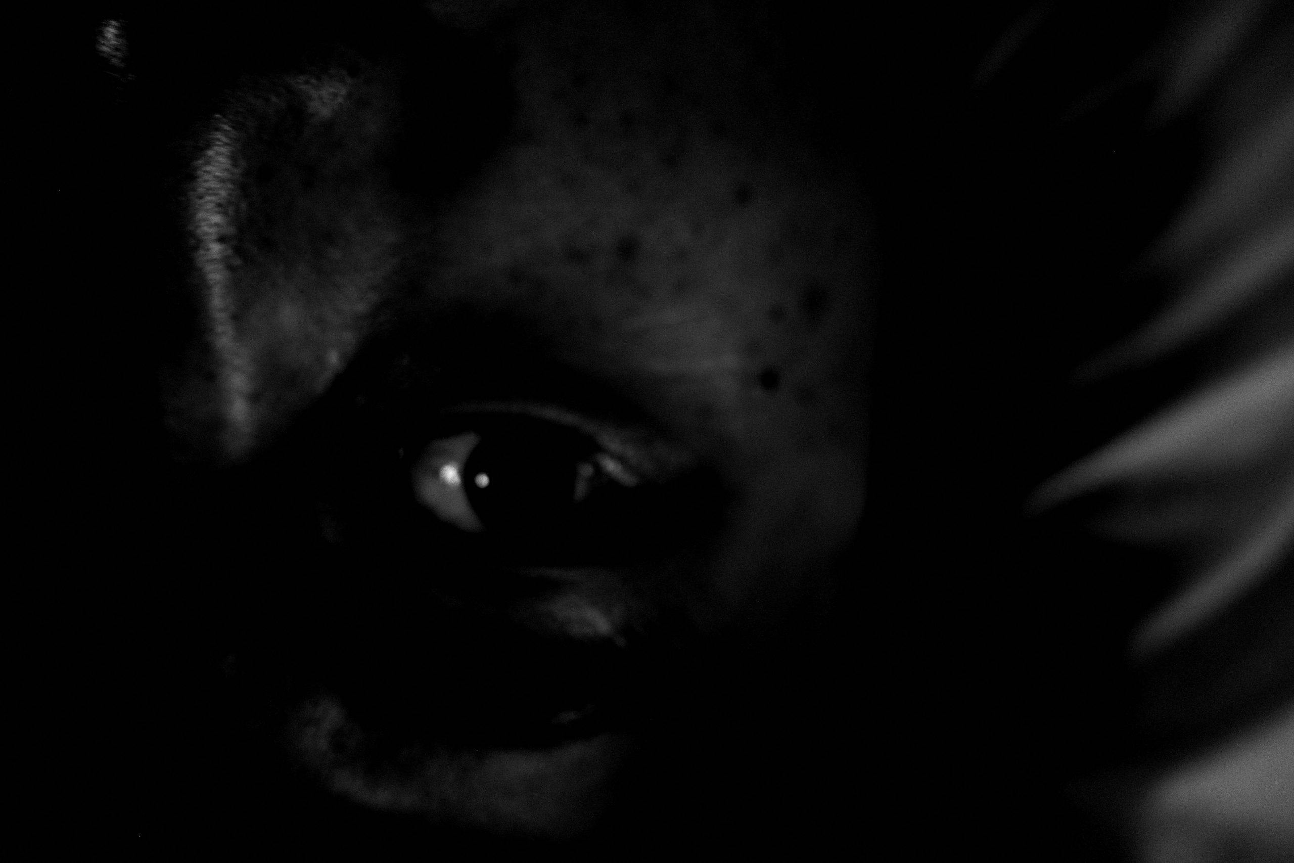 selfie black and white eye ERIC KIM low key low exposure