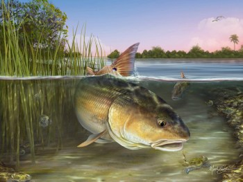 Redfish art print gift for fisherman