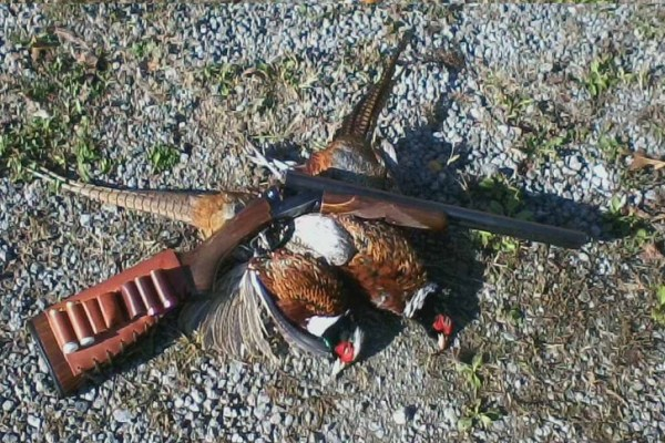 upland game gun