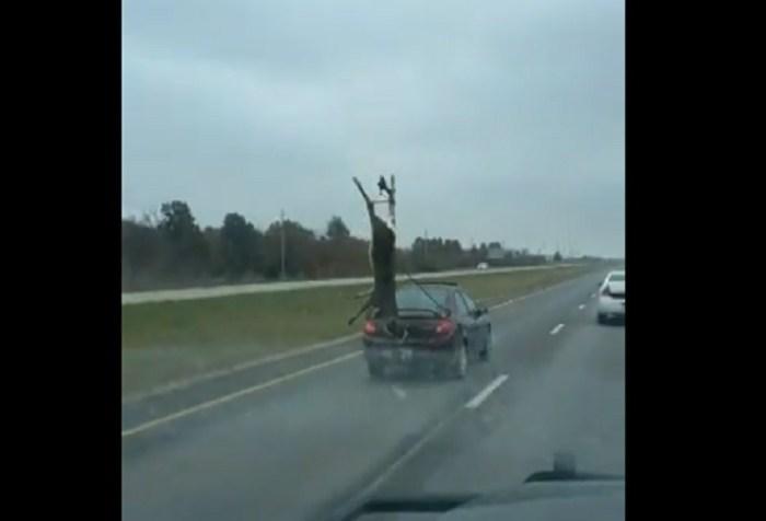 deer transport