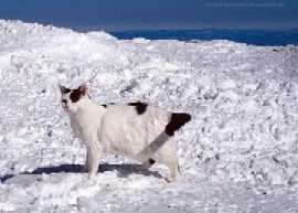 Nin snow