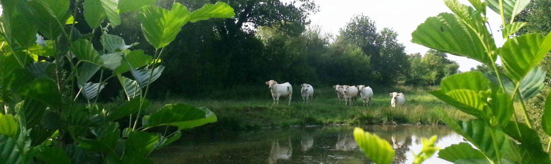 Éleveur dans le Maine et Loire