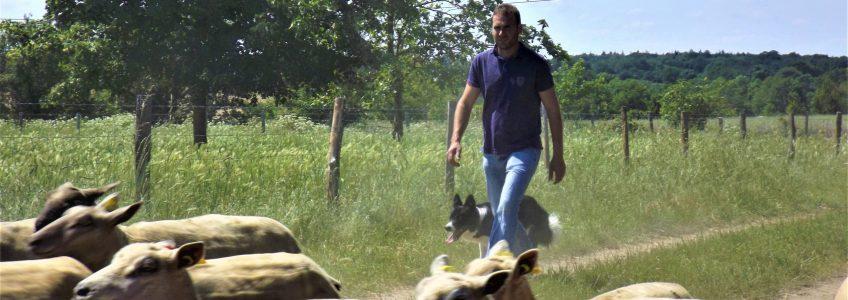 Découvrez un éleveur d'agneaux près d'Angers