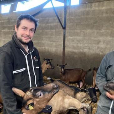 Un élevage de chevreaux géré par deux frères dans le Maine-et-Loire