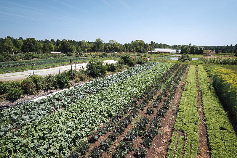Could Small Scale Micro-farming Work in Erie County?