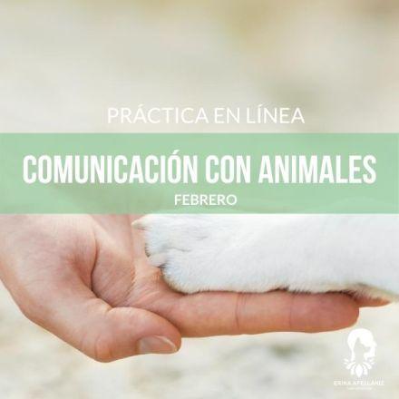 Práctica de Comunicación con Animales_Febrero
