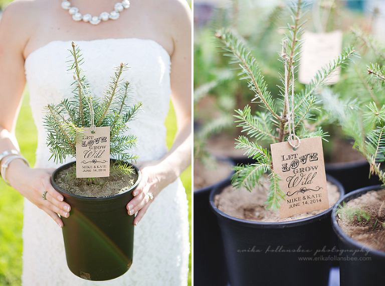 Wedding Favors Tree Pine Seedling